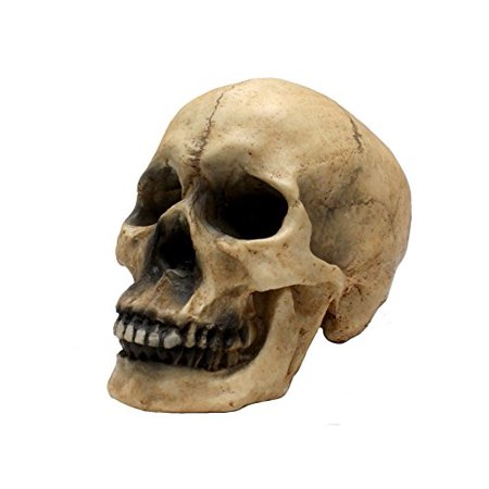 Halloween Home Decoration (Skull Decor By DWK- Actual Skull Size - Halloween Decoration - Gothic Home)