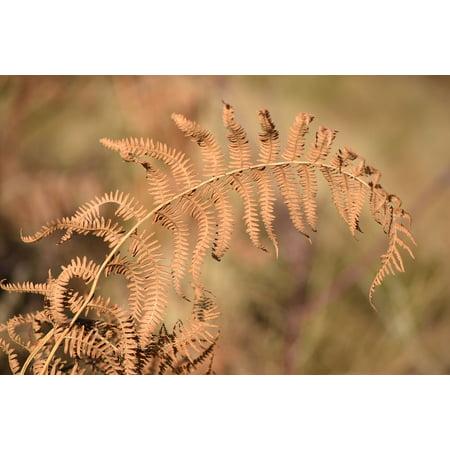 LAMINATED POSTER Nature Autumn Fern Leaves Stem Plant Poster Print 24 x 36