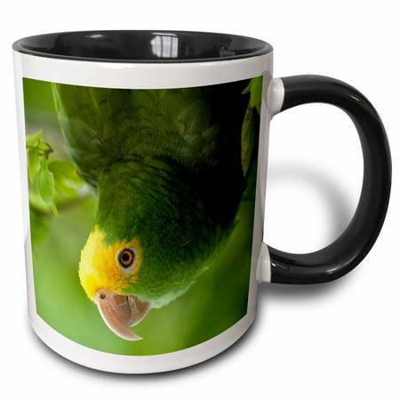 - 3dRose Yellow-headed Amazon Parrot, Tropical bird, Belize - SA02 POX0118 - Pete Oxford - Two Tone Black Mug, 11-ounce