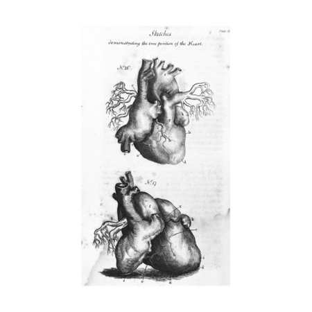 Engraving of Human Heart Print Wall Art ()