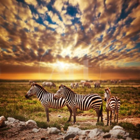 Zebras Herd on Savanna at Sunset, Africa. Safari in Serengeti, Tanzania Print Wall Art By Michal Bednarek ()