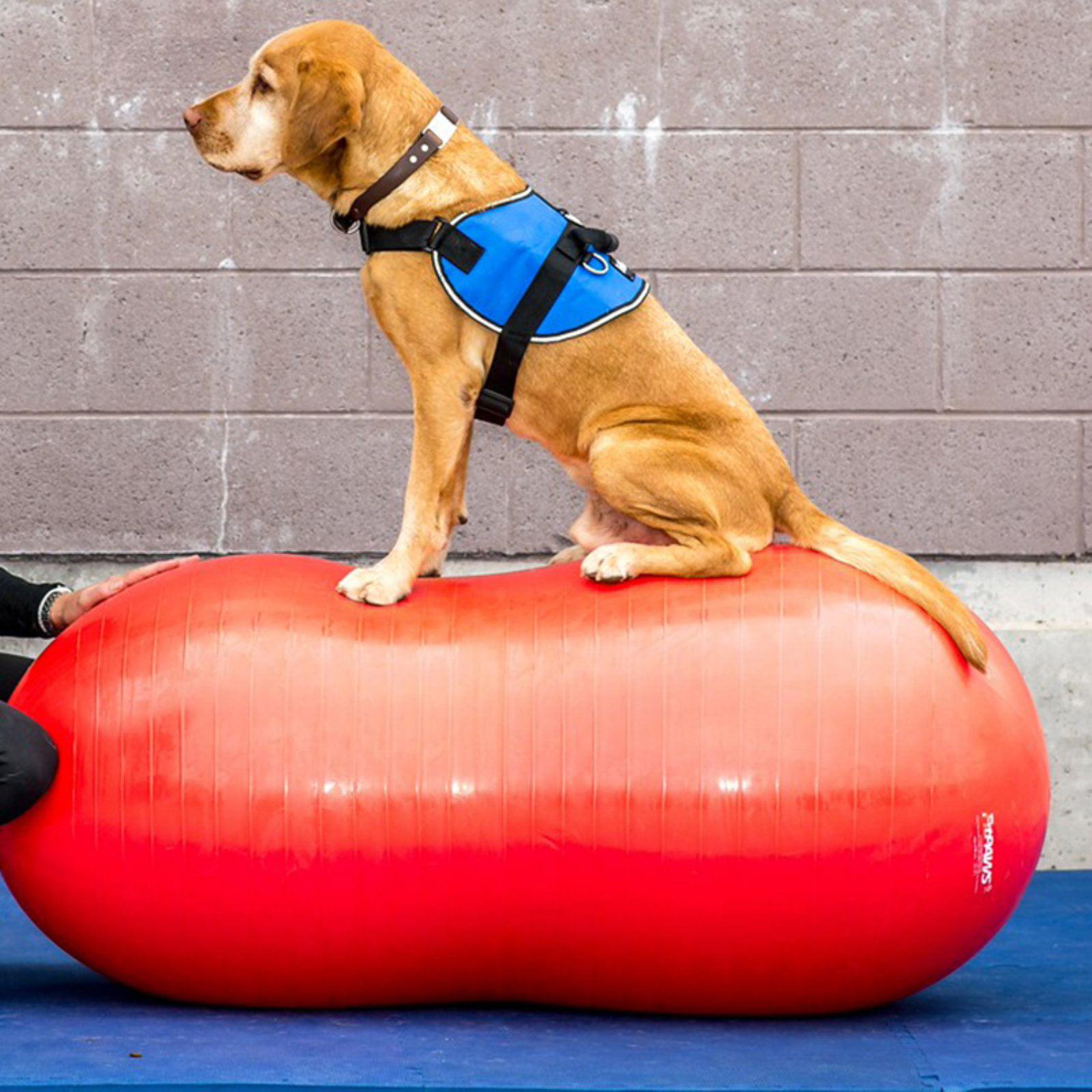 FitPAWS Canine Agility Peanut Ball