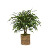 3 ft. Ruscus Tree in Split-Rattan Basket, Green