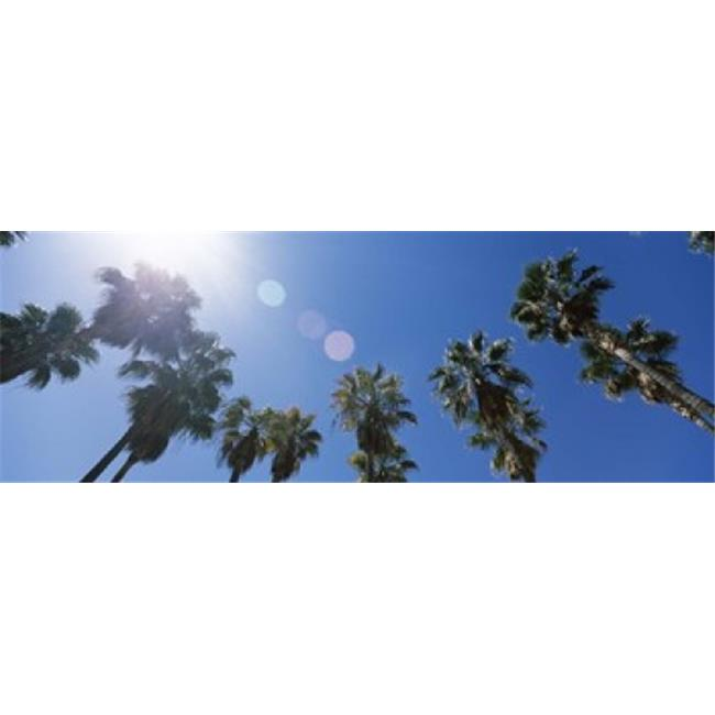 Low angle view of palm trees  Downtown San Jose  San Jose  Santa Clara County  California  USA Poster Print by  - 36 x 12 - image 1 of 1