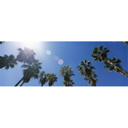 Images panoramiques PPI120647L Faible angle de vue de palmiers centre de San Jose San Jose Santa Clara Californie copie d'affiche par images panoramiques - 36 x 12 - image 1 de 1