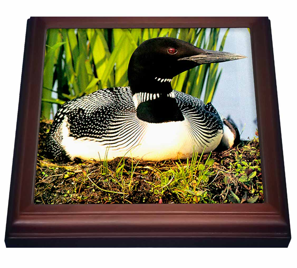 3dRose Loon Duck, Trivet with Ceramic Tile, 8 by 8-inch
