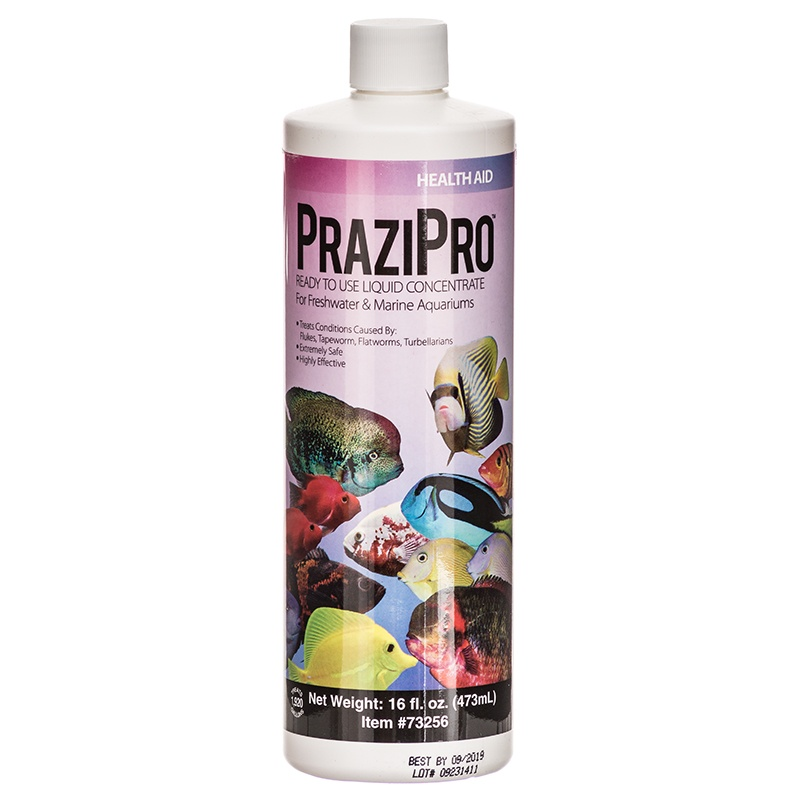 Hikari PraziPro for Freshwater and Marine Aquariums 1 Gallon