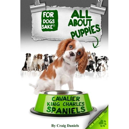 All About Cavalier King Charles Spaniel Puppies -