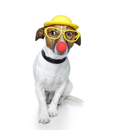 Funny Dog Nose Hat Glasses Print Wall Art By Javier Brosch (Funny Glasses And Nose)