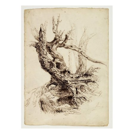 Gnarled Tree Trunk, C.1826 (Pen and Brown Ink over Graphite Pencil on Cream Wove Paper) Print Wall Art By Thomas