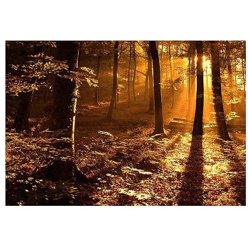 "Trademark Art ""Morning Light"" Canvas Art by Philippe Sainte-Laudy"