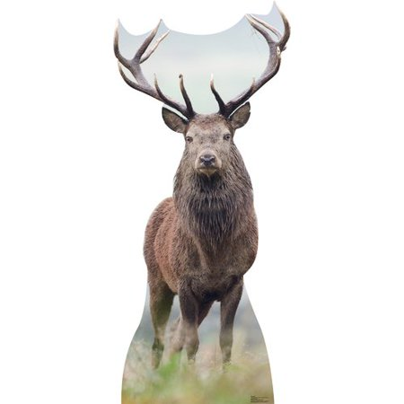 Elk Deer wapiti Animal Lifesize Standup Standee Cardboard Cutout Poster](Cardboard Animals)