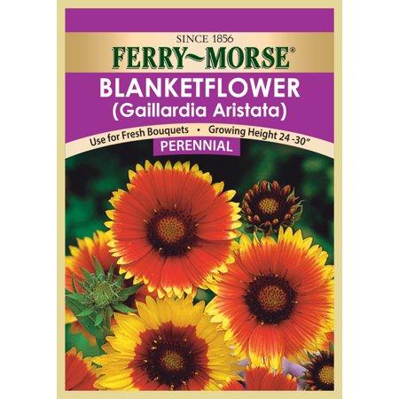 Perennial seed Blanketflower-Aristata