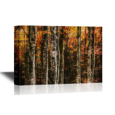 wall26 Forest Canvas Wall Art - Beech Trees in Autumn - Gallery Wrap Modern Home Decor | Ready to Hang - 12x18 - Autumn Decor