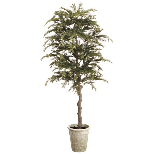 Gracie Oaks Pine Topiary Floor Foliage Tree in Paper Mache Pot