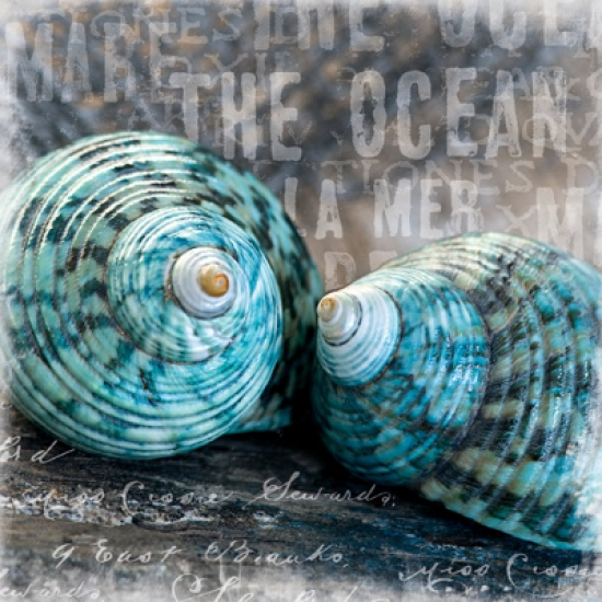 Blue Ocean Shells Poster Print by Andrea Haase (20 x 20)