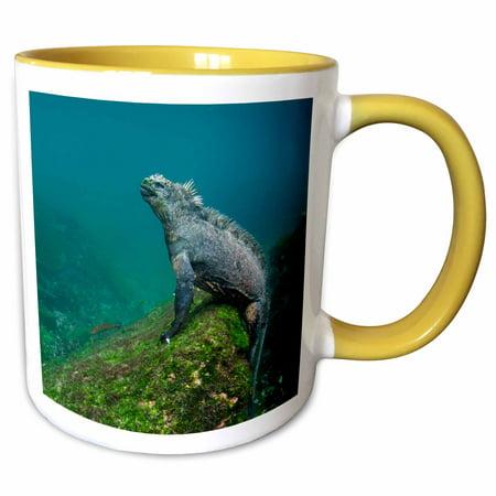 3dRose Marine Iguana, underwater. Fernandina Island, Galapagos - Two Tone Yellow Mug, 11-ounce