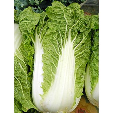 Cabbage Chinese Michihili Heirloom Vegetable 40,000 Seeds BULK (China Wholesale Electronics)