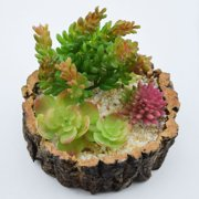 """Realistic Succulents Plant in 5"""" Tree Trunk Pot - Table Centerpiece"""