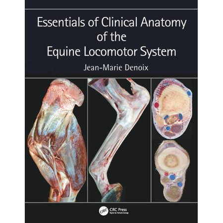 Essentials of Clinical Anatomy of the Equine Locomotor - Digestive System Anatomy