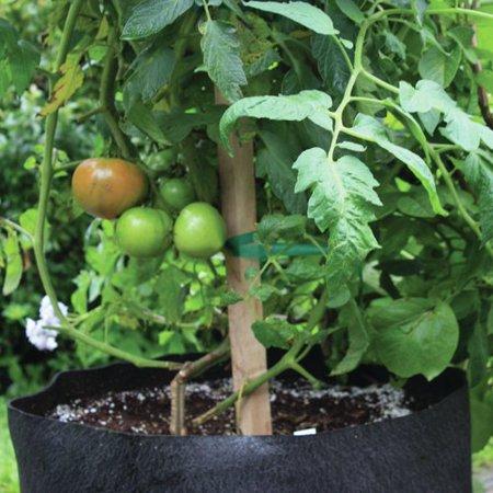 Smart Pot 20 Gallon Tomato   Melon Black Grower