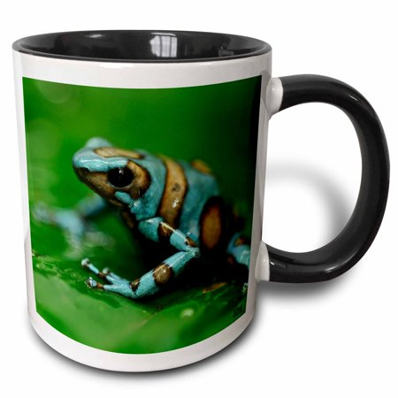 3dRose Blue n brown tree frog on a leaf, Two Tone Black Mug, 11oz