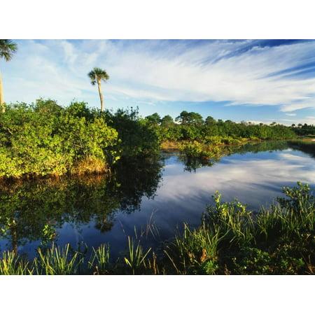 Refuge Point - Mangrove Wetland Habitat, Merritt Island National Wildlife Refuge, Florida, USA Print Wall Art By Adam Jones