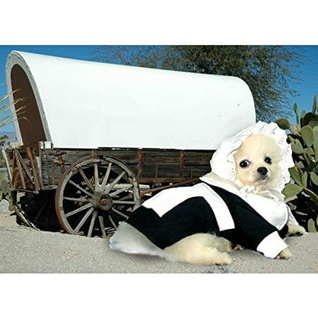 Dog Costume PILGRIM GIRL COSTUMES Dress Your Dogs For Thanksgiving(Size 0) (Dog Pilgrim Costume)