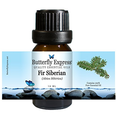 Fir Siberian Essential Oil 10ml - 100% Pure - by Butterfly Express