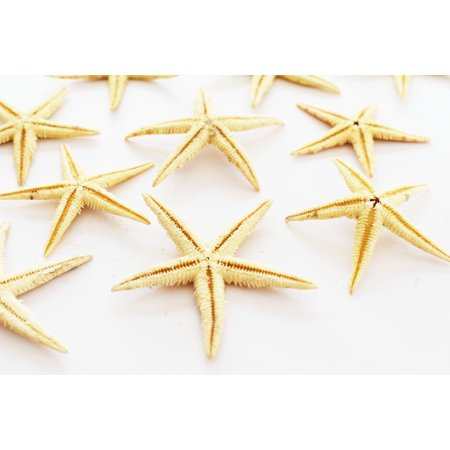 - 12 Medium Size Starfish - Philippine Tan Flat Sea Stars (1 1/2
