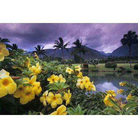 Hawaii Maui Yellow flowers at the Waikapu Valley Tropical Plantation PosterPrint ()