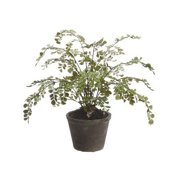 Tori Home Maidenhair Fern Floor Plant in Pot
