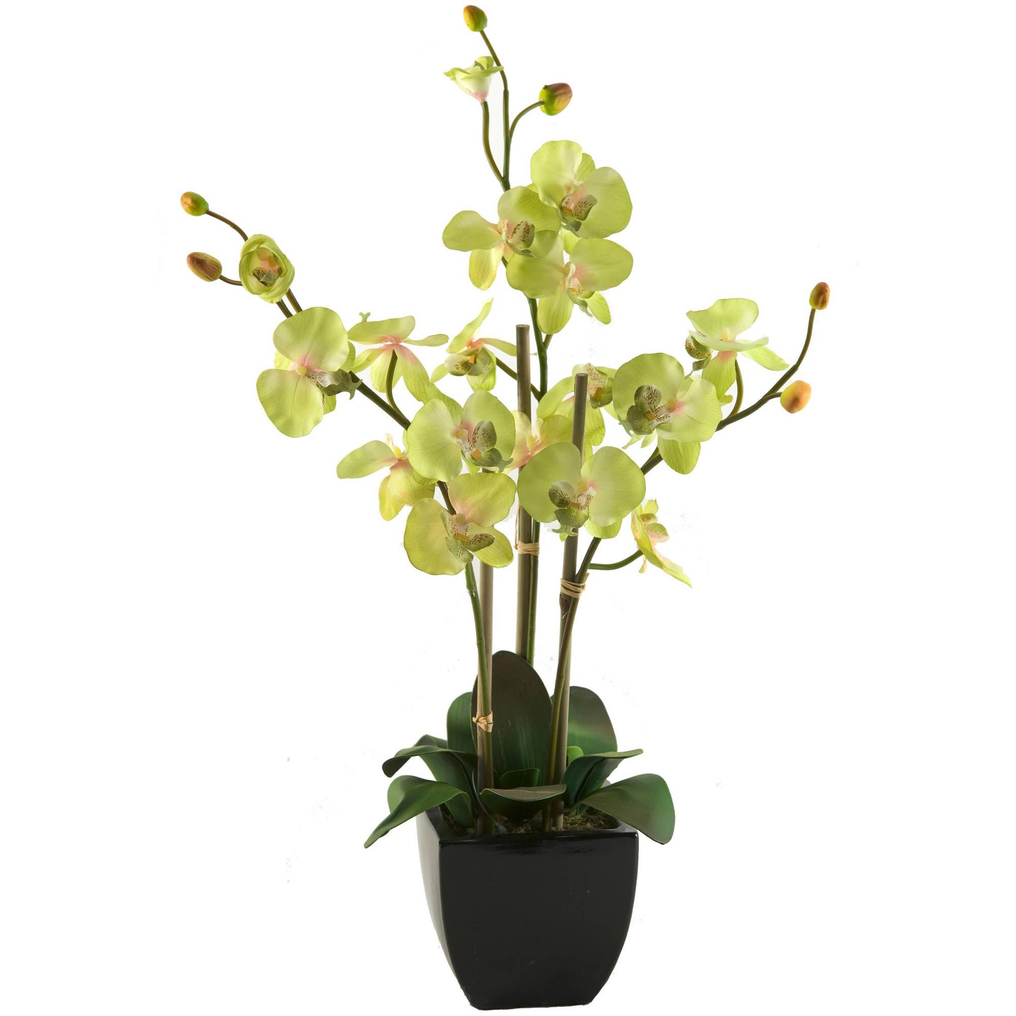 D&W Silks Green Phael Orchids in Black Ceramic Planter