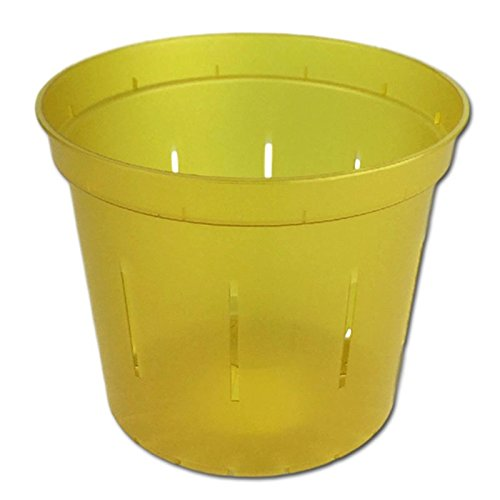 "6"" Slotted Clear Orchid Pots - 3 Pack (Rose Quartz)"