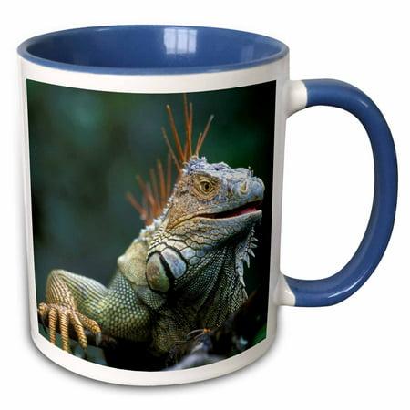 3dRose Costa Rica, Muelle San Carlos, Iguana lizard - SA22 PSO0005 - Paul Souders - Two Tone Blue Mug, 11-ounce