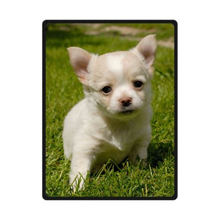CADecor Adorable Chihuahua Puppy Fleece Blanket Bedroom Wrap Throw 58x80 inches