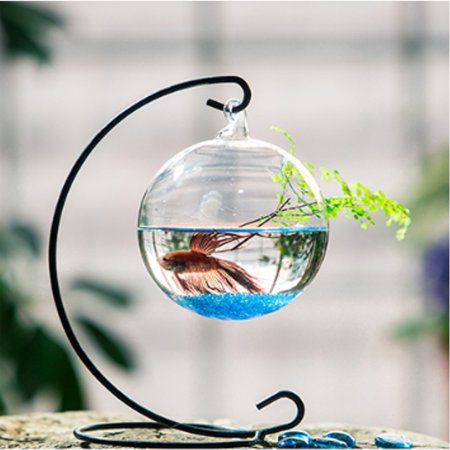 Moaere Aquatic Living Moss Balls Hanging Glass Vase with Bent Metal Stand Desk Decoration (Hanging Glass Balls)