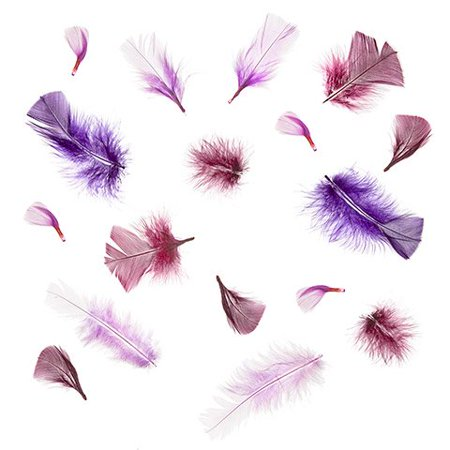 Turkey Pop - Create a fancy garland to hang on your wall with these purple turkey flat feathers. The bright purple feathers add a pop of color to neutral walls.