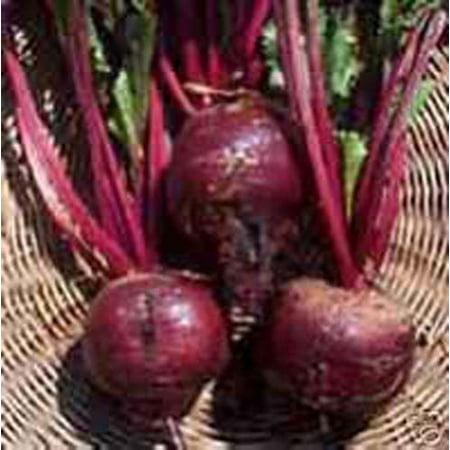 Beet Early Wonder Tall Top Great Heirloom Vegetable 500 Seeds