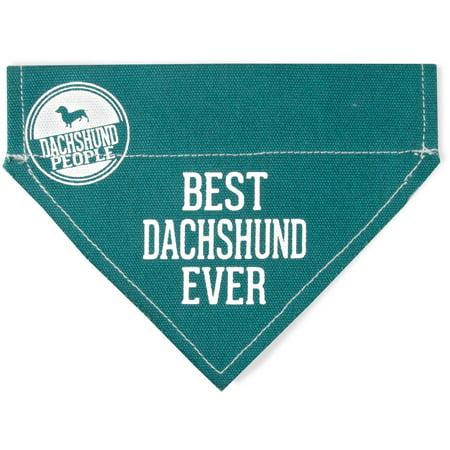 Pavilion - Best Dachshund Ever - Teal Canvas Small Dog Bandana Collar - 7