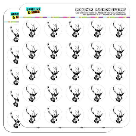 Deer Head Buck Deer Hunting 1