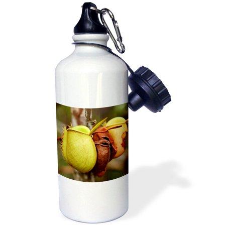 3dRose Borneo, Malaysia, Sarawak, Pitcher plant flora-AS23 JST0032 - Jay Sturdevant, Sports Water Bottle, 21oz
