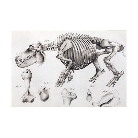 1812 Hippopotamus Skeleton by Cuvier Print Wall Art By Stewart - 1812 Telephone Entry System