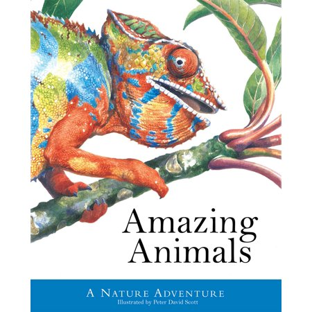 Amazing Animals : A Nature Adventure