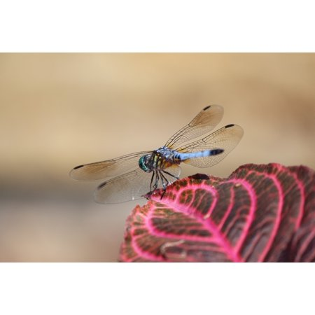 LAMINATED POSTER Insect Bug Nature Dragonfly Wing Poster Print 24 x 36