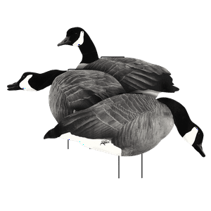Canada Goose Flocked Head Silhouette Decoy