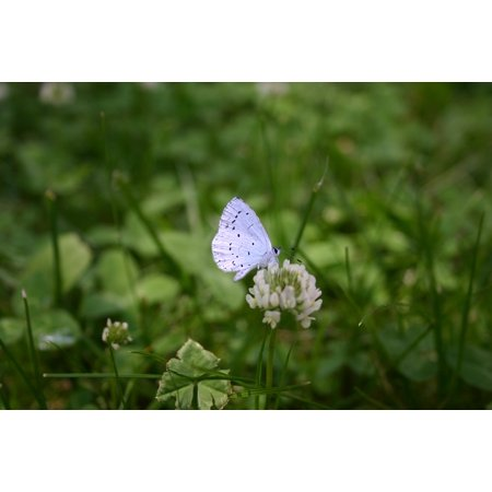 LAMINATED POSTER Close Summer Butterfly Insect Nature Meadow Poster Print 24 x 36