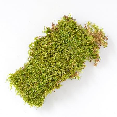 Mosser Lee ML0470 Sheet Moss Soil Cover, 675 sq. in.