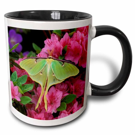 3dRose USA, Pennsylvania, Luna moth insect, pink azaleas - US39 BJA0010 - Jaynes Gallery - Two Tone Black Mug, -