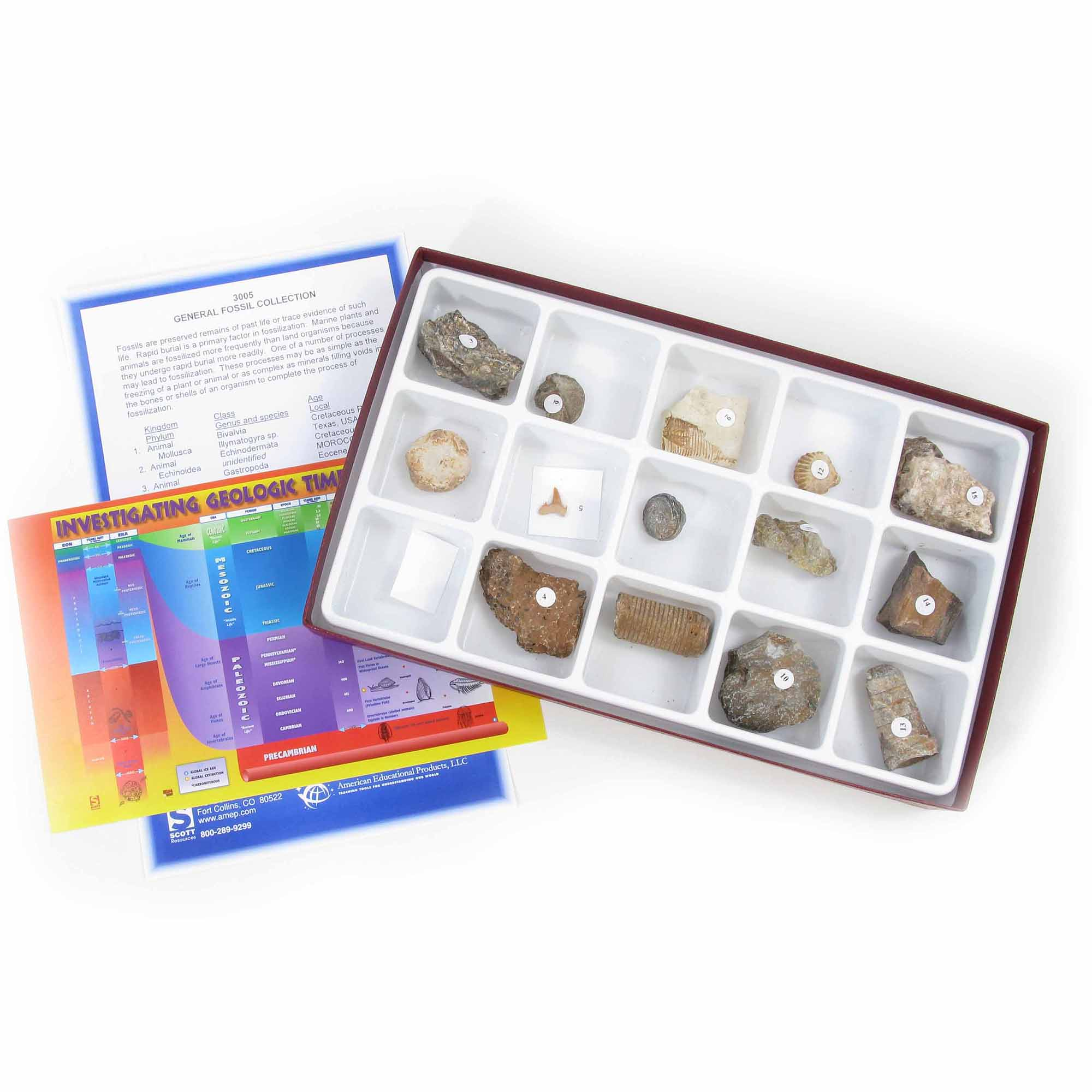 American Educational Products General Fossil Collection